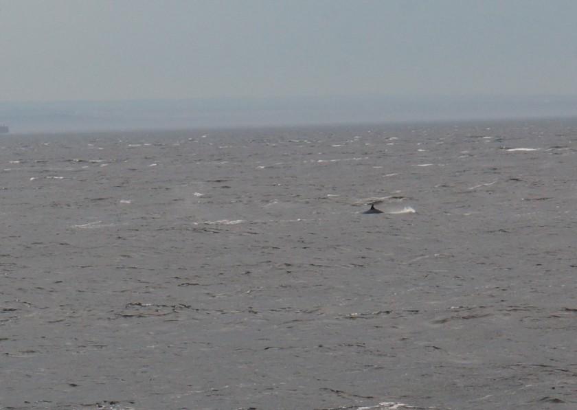 baleine de dessus