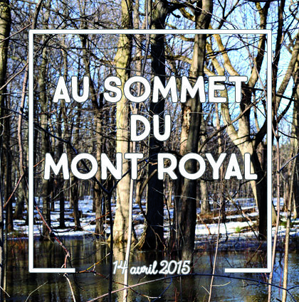 detour du monde blog - sommet mont royal